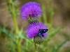 Epirus-vakantie-bloemen-vlinder-600