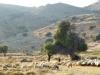 Evia-Karystos-geiten-600
