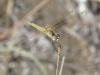 Evia-libelle-600