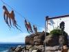 Griekenland-vakantie-fotos-Lesbos-inktvis-600