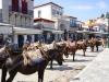 Hydra-vakantie-kade-paarden-ezels-600