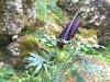 Imbros-kloof-Kreta-plant-600