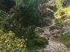 Imbros-kloof-kreta-bloemen-en-pad-600