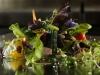 Kensho-Boutique-hotel-mykonos-restaurant-600
