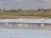 kos-flamingos-alikes-meer-griekenland-600