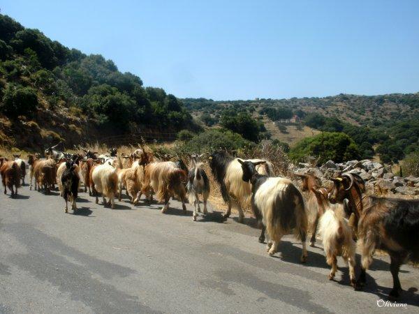 Kreta-in-de-bergen-600