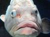 kreta-zee-aquarium-chersonissos-griekenland-600