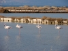 lesbos-kalloni-flamingos-griekenland