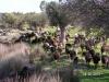 Lesbos-Kalloni-schapen-griekenland-600