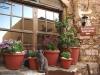 Monemvasia-Peloponnesos-bloempotten-katten-600