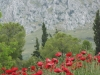 Peloponnesos-oud-korinthe-klaprozen-600