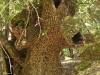 Rhodos-vlindervallei-600