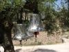Zakynthos-klokken-olijfboom-600