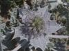 Zakynthos-bloem-van-het-oosten-600