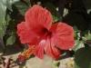Zakynthos-fiore-di-levante-600