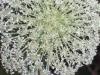 Zakynthos-bloemen-600