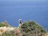Zakynthos-uitzicht-geiten-600
