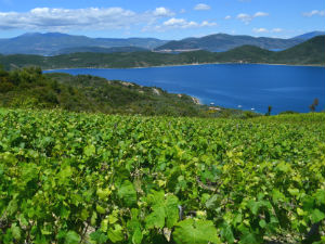 Grieks eten Griekse wijnen