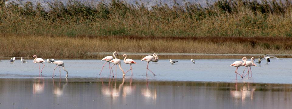 Griekenland natuur Flamingos header.jpg