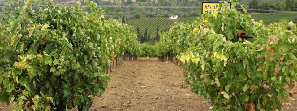 GriekseWijnen wijnhuis griekenland header.jpg