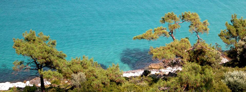 Thassos vakantie zee naaldbomen griekenland header.jpg