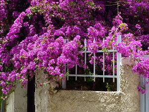 Griekenland vakantiebestemmingen Skiathos