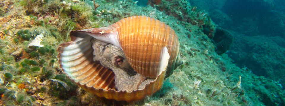 Griekenland vakantie duiken octopus header.jpg