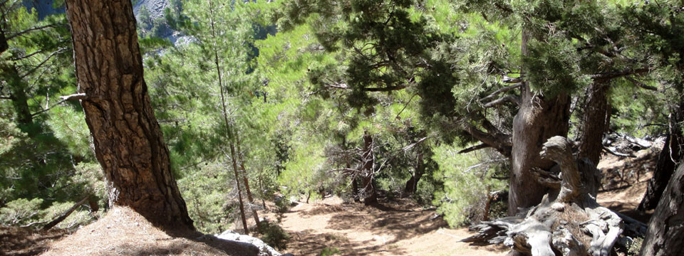 Kreta vakantie samaria kloof griekenland 3001.jpg
