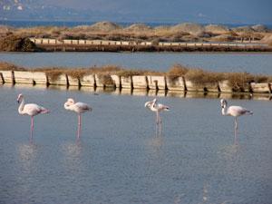 Flamingo's in de golf van