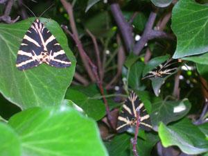 De vlindervallei op Paros.