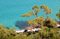 Thassos vakantie uitzicht op zee naaldbomen