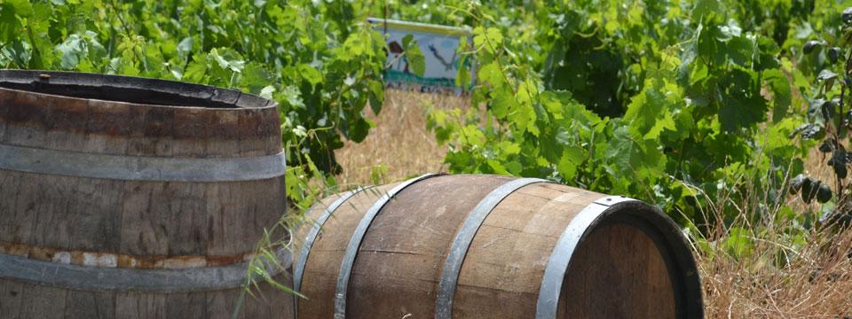 Mykonos vakantie wijn griekenlandnet header.jpg