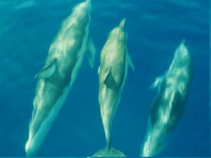 Dolfijnen in het National Marine Park