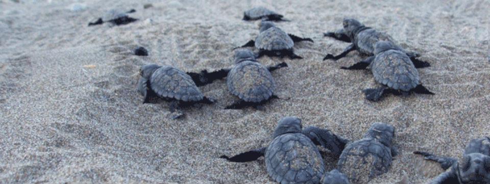 Zakynthos vakantie National Marine Park Caretta Caretta.jpg