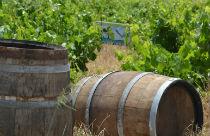 Vioma winery Mykonos
