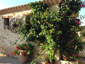 Tsilivi Zakynthos traditionele villa