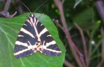 Vlindervallei Paros