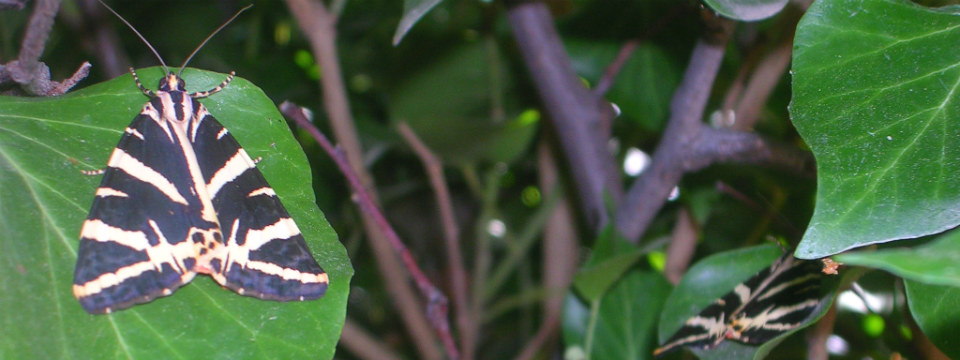 Paros vakantie Petaloudes vlinder vallei header.jpg
