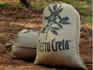 Terra Creta olijfolie beste van Griekenland