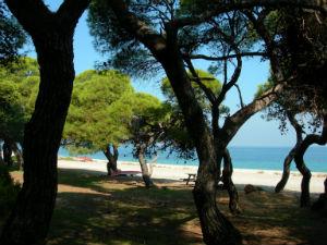 Pefkias bos bij Xylokastro en het strand