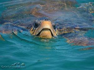 Ontdek zakynthos Caretta Caretta schildpad