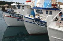 Pefki haven met vissersboten Evia