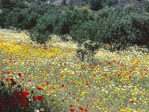 Samothraki waar goden heersen bloemen