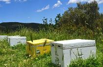 Passie voor honing Melissourgion op Evia