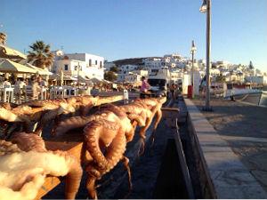 Inktvissen in de haven van Naoussa op Paros