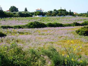 Bloemenvelden bij Klismata op Kefalonia