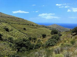 Kea groen landschap wandelen