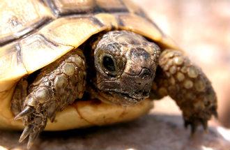 Genieten en wandelen op Samos schildpad