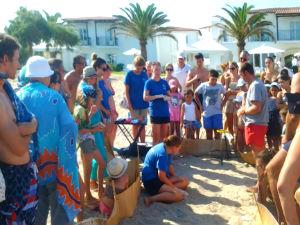 Zeeschildpadden op Kreta hatchling bij Grecotel Caramel Boutique Hotel