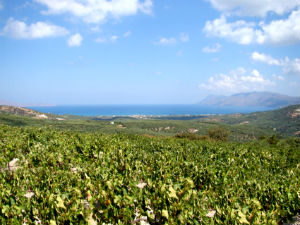 Pnevmatitakis wijnhuis wijngaarden op Kreta